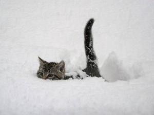 snow_neko